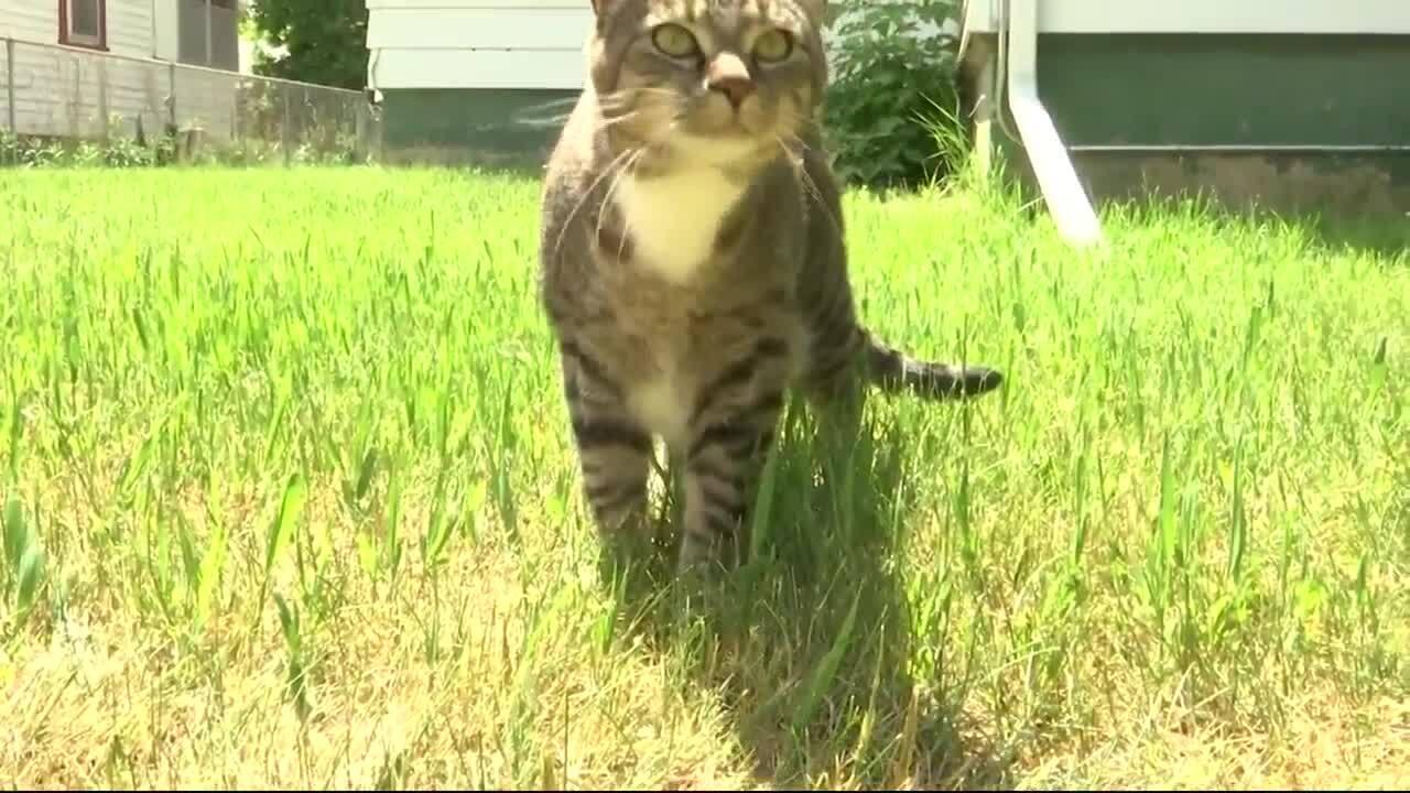 Billings horticulturist gives tips to grow a better lawn