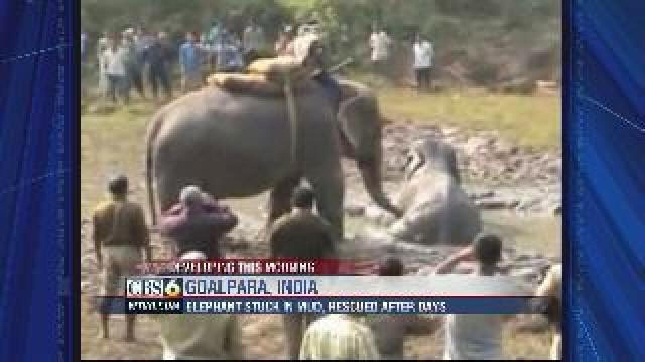 Elephant saved from mud after being stuck for days