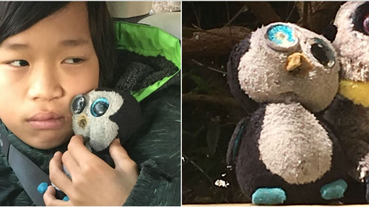 Child hopes 'power of good humans' brings Beanie Boo penguin back home