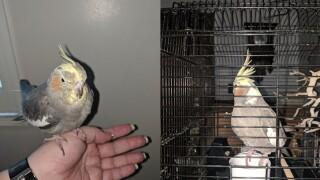 Jail bird.jpg