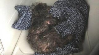 Small dog clinging to life after being thrown out of car window in New Jersey