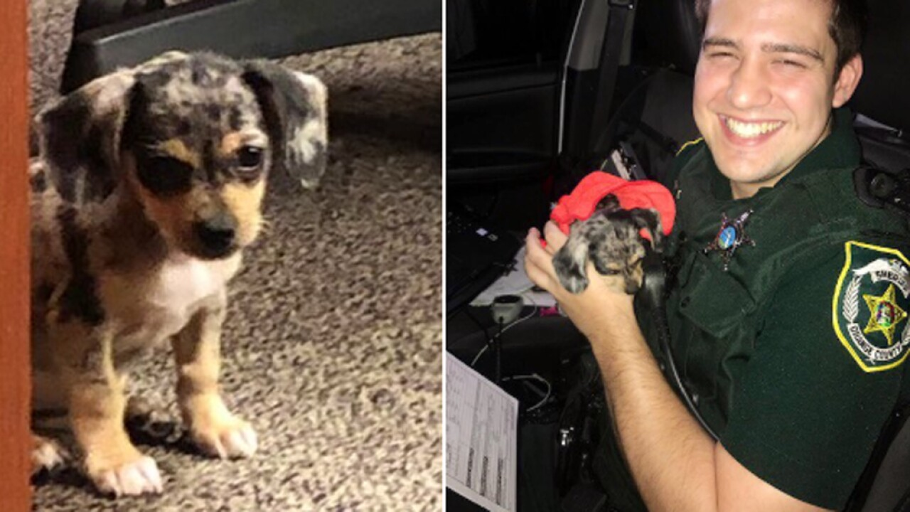 Florida deputy finds adorable puppy, names her Dorian