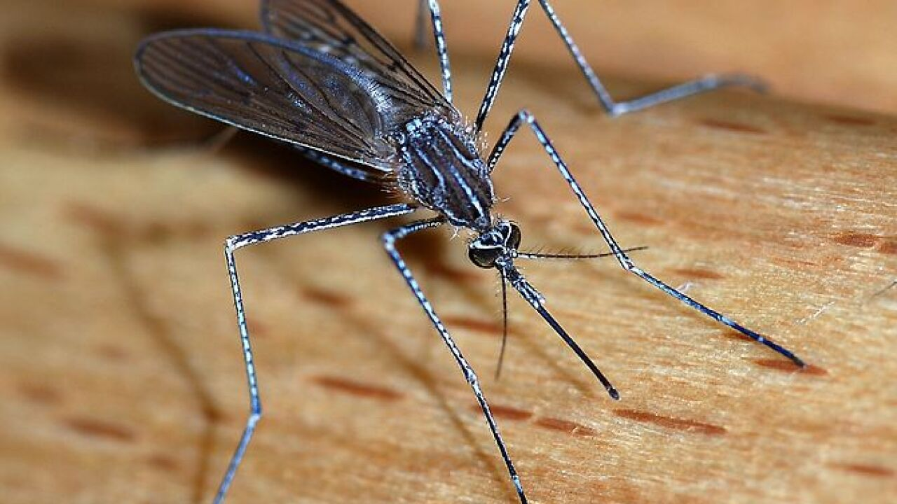 West Nile virus on the rise in the U.S.