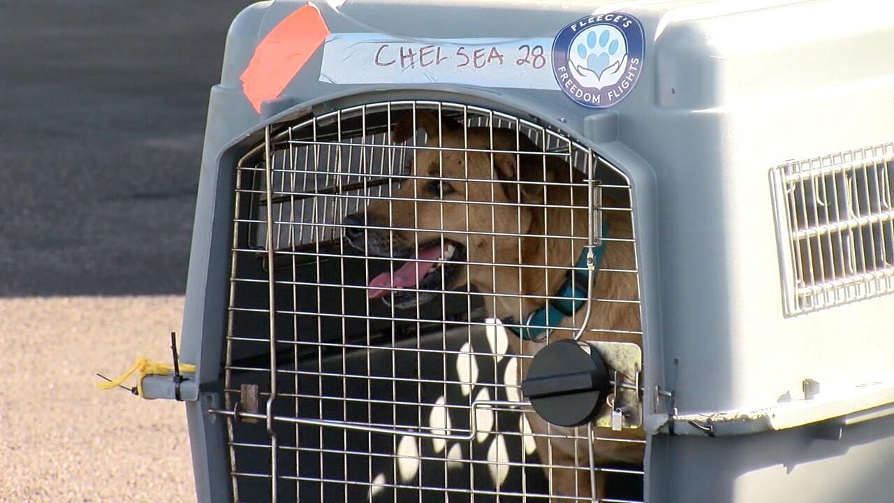 VOLCANO DOGS RESCUE (6).jpg