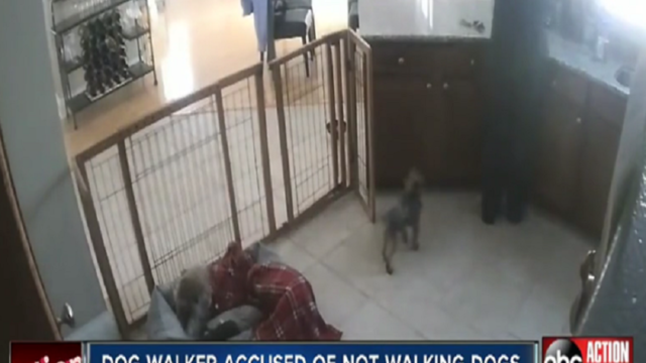 WATCH: Family says dog walker didn't walk dogs