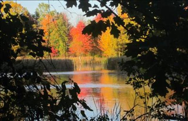 Yes! Pics: Fall Foliage