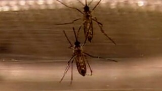 Hillsborough County seeing more mosquitoes