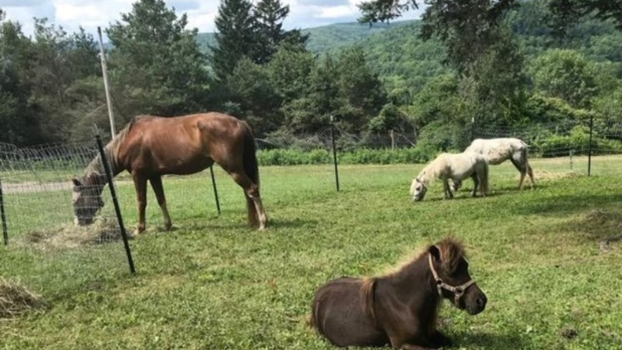 28 dogs, 6 cats and 4 horses rescued from home