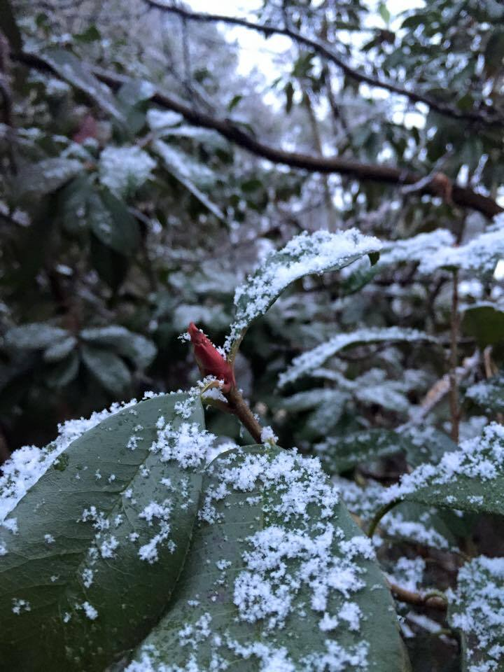 Photos: Share your snowpictures!