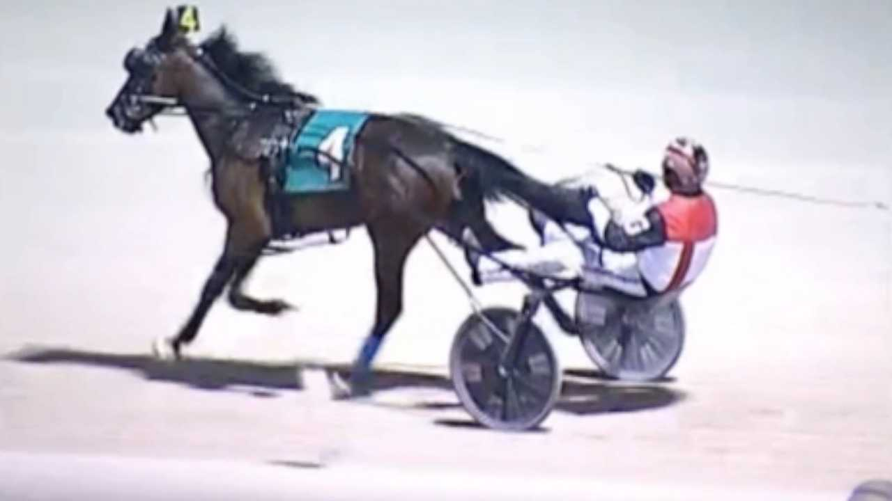 Owner heartbroken, confused after racehorse is released from barn and dies in icy lake