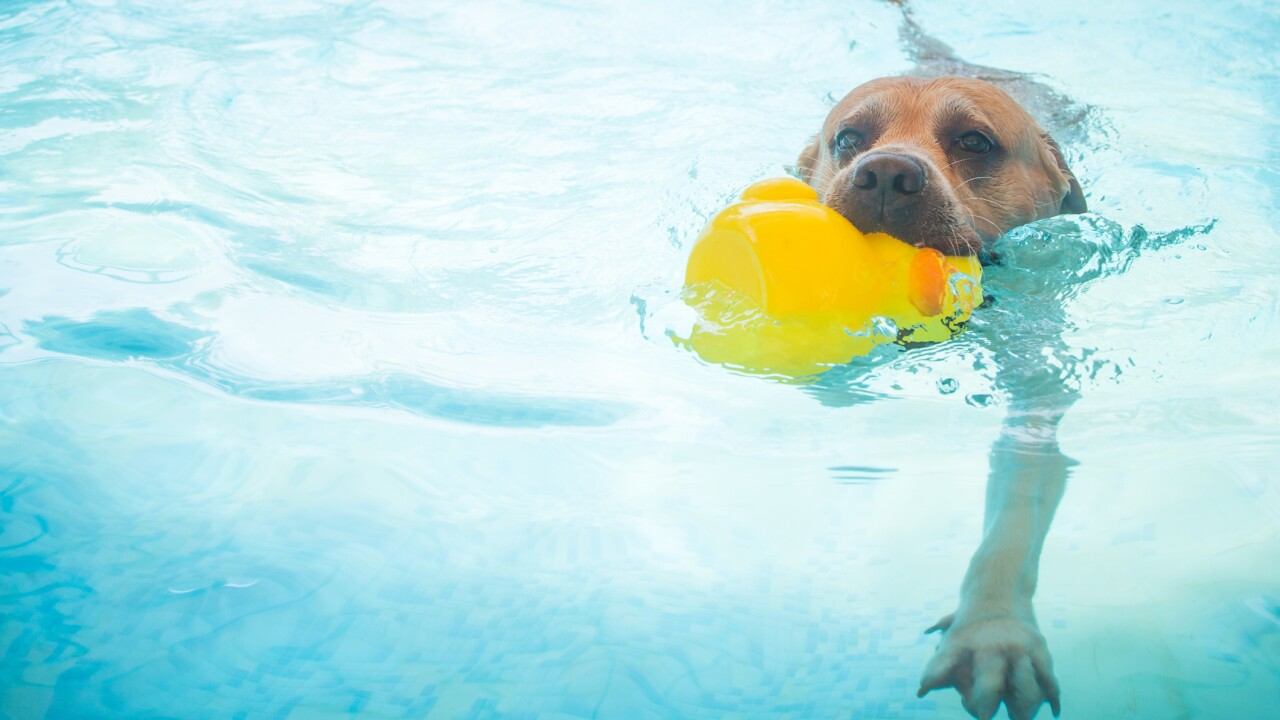Take your dog for a swim on Saturday at the Norfolk Fitness and Wellness Center pool!