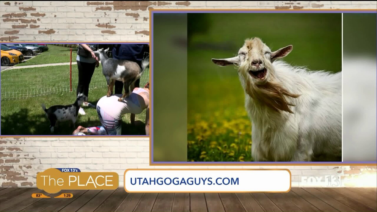 Where you can do Goat Yoga in the city, plus we try itout!