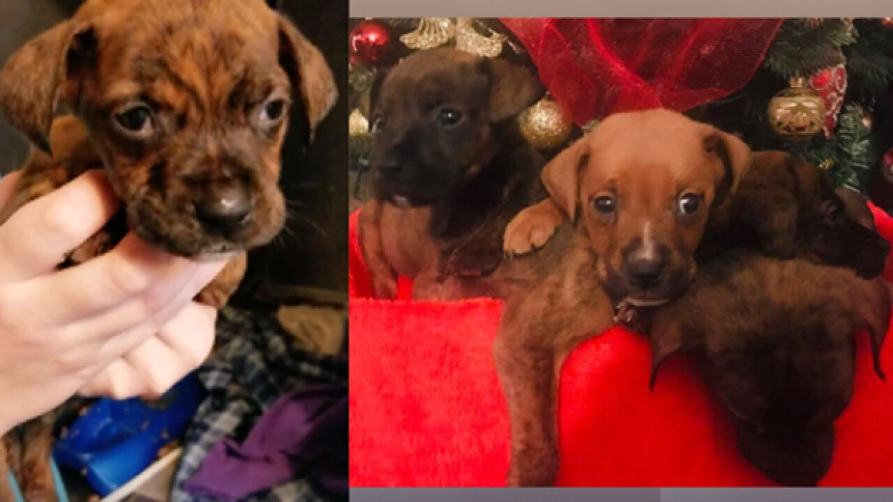 Five puppies rescued after being left in dumpster