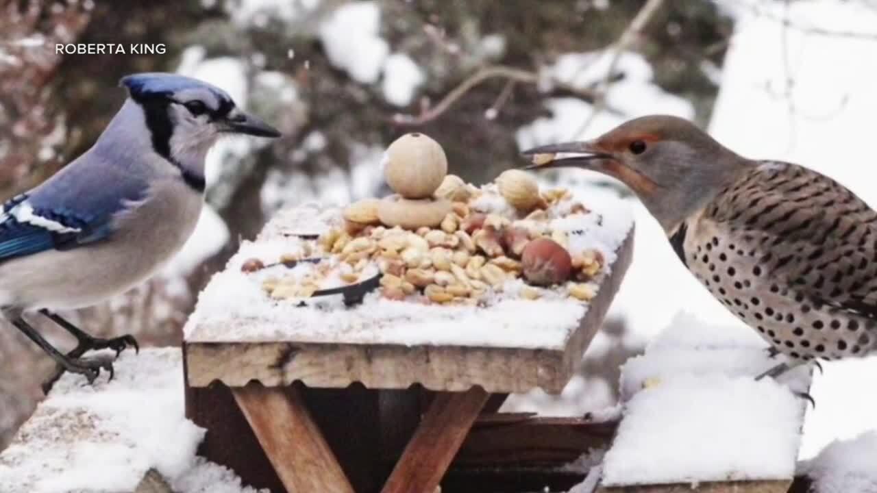 "photographer spreads joy through ""picnic critters"""