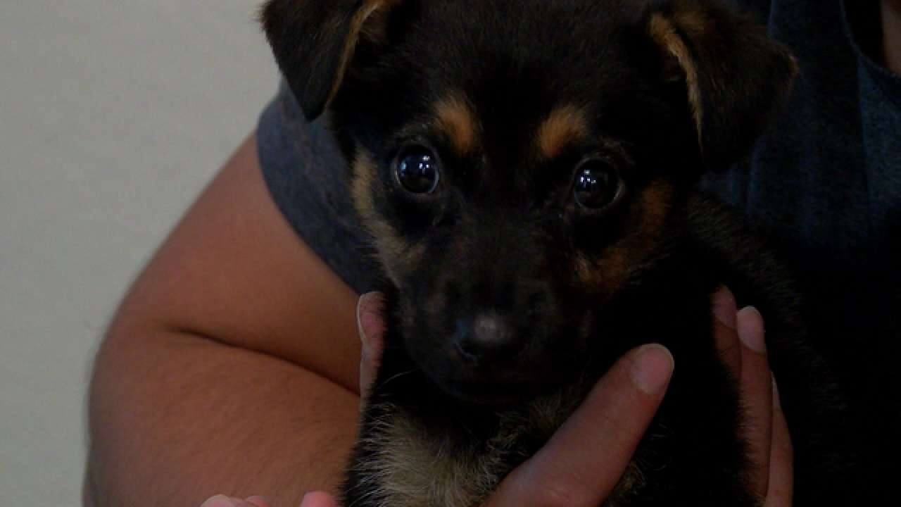 San Diego Couple Says Dogs Sold On Craigslist Have Deadly Infections