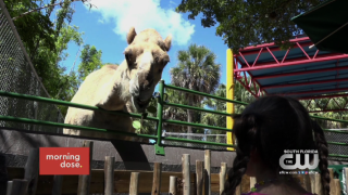 Paws & Claws: Keepin' it Wild at Zoo Miami