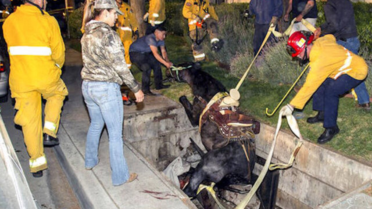 Horse rescued after falling through utility vault during Taco Bell run