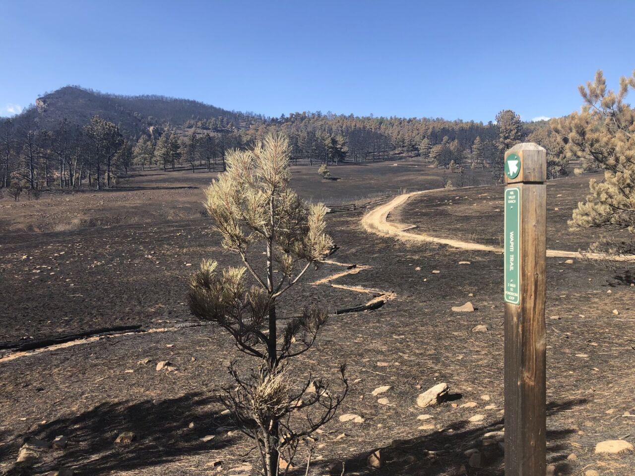 Wapiti Trail at Heil Valley Ranch