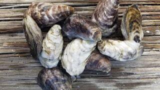 shellfish1.JPG