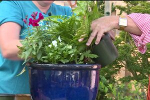 Coleville Nursery Helps Get Your Garden Ready forFall