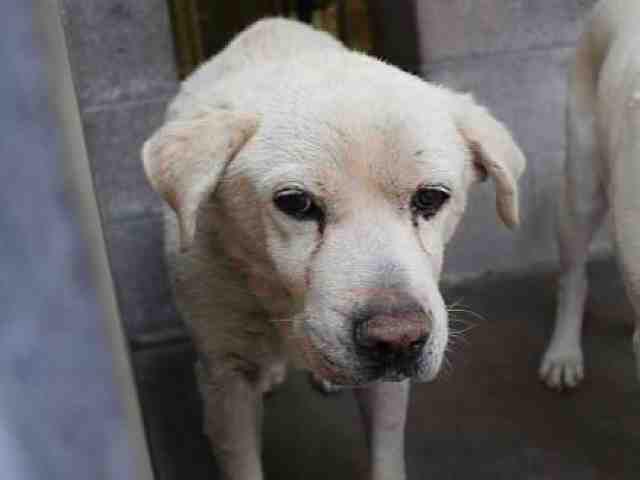 Adoptable pets from Maricopa County Animal Care and Control and Arizona Humane Society (11/22)