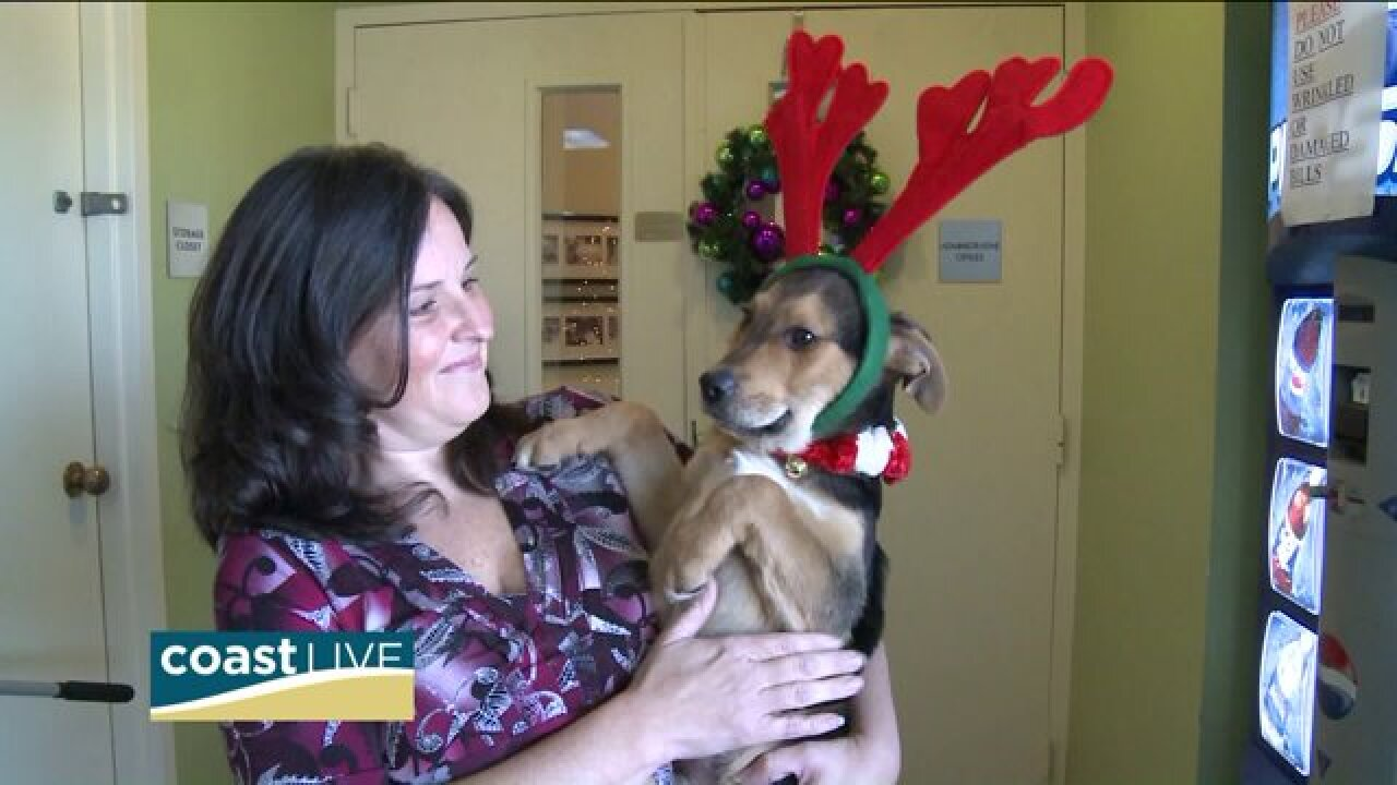Expert advice for protecting pets during the holidays on Coast Live