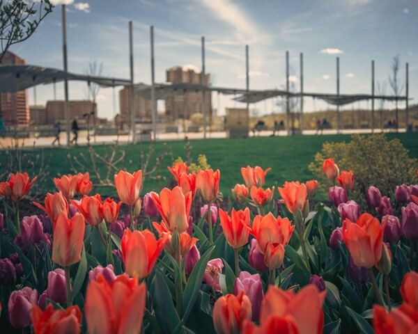 Cincygram revels in the blossoming new season downtown along the river