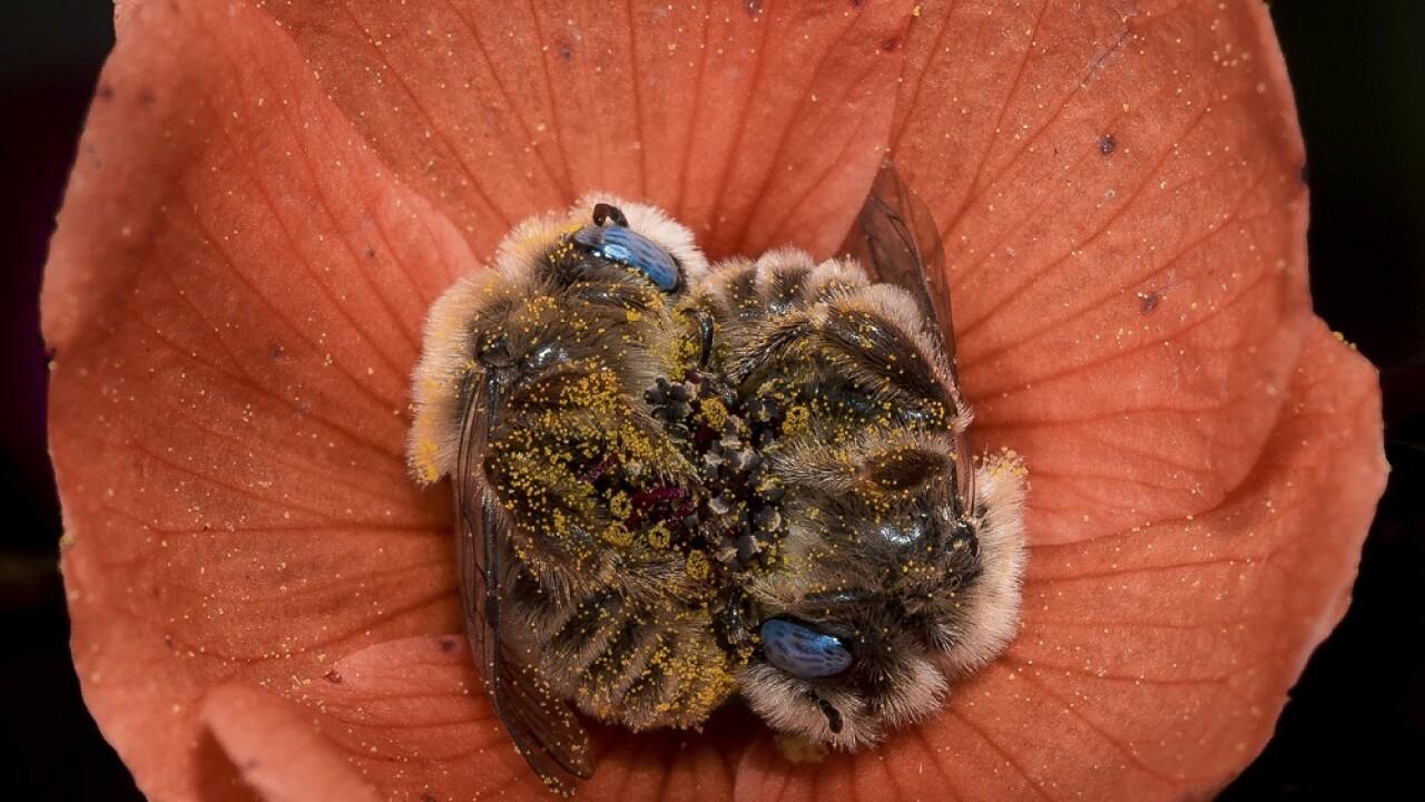 Two bees sleeping in a flower, US 60 near Globe, AZ by Joe Neely