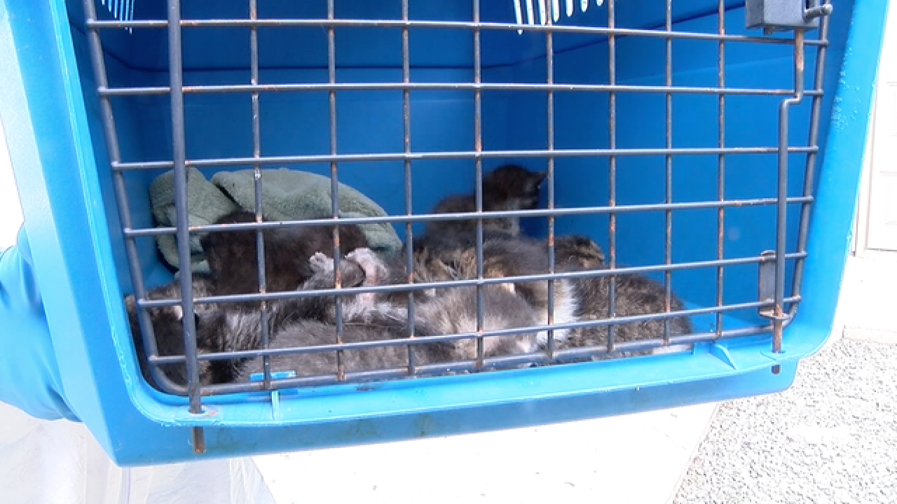 More than 100 cats found in home