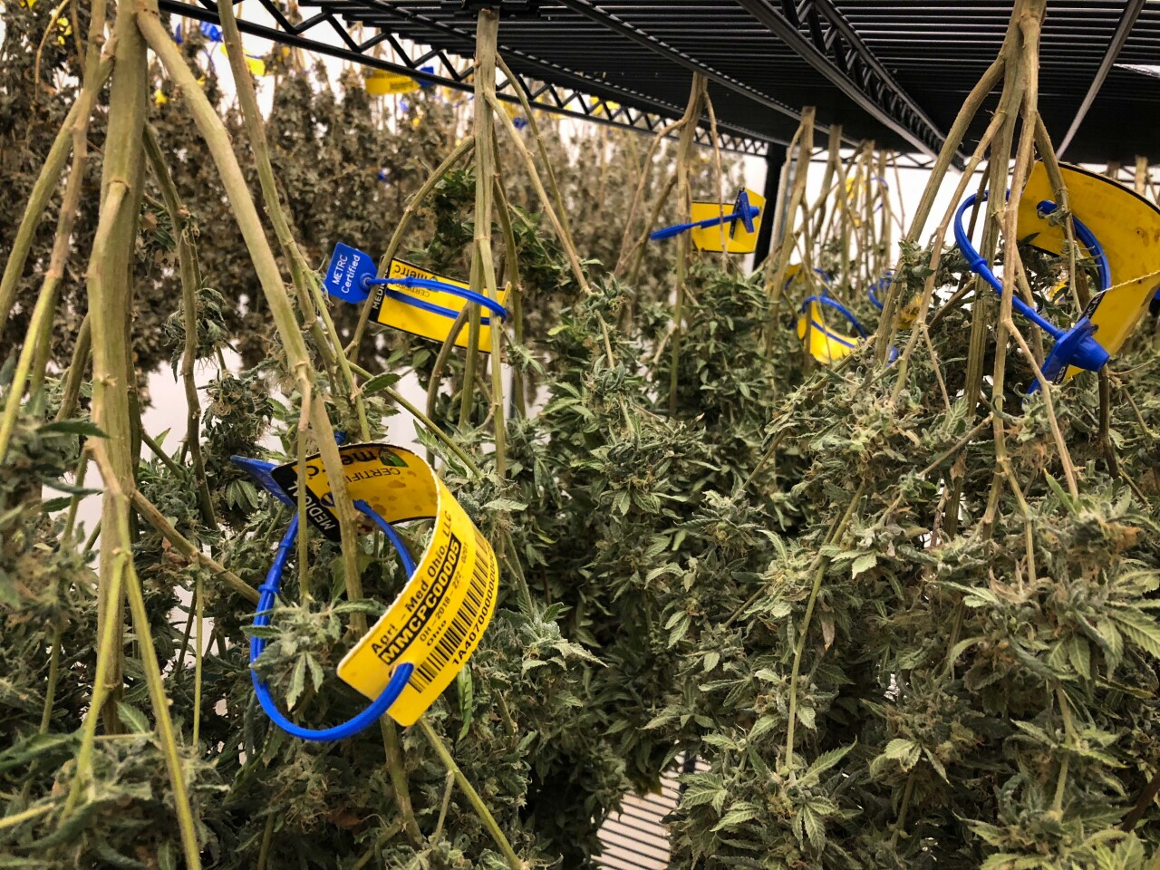 Medical Marijuana15.jpg