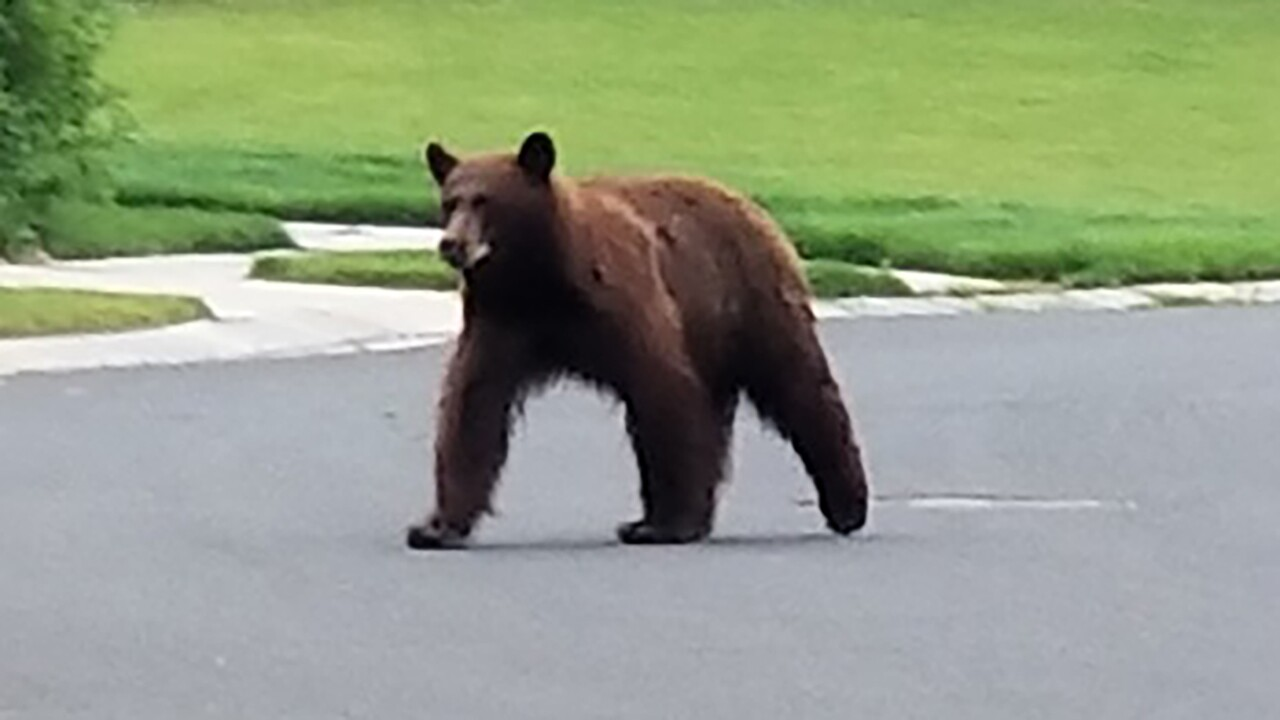 BROOMFIELD BEAR.jpg