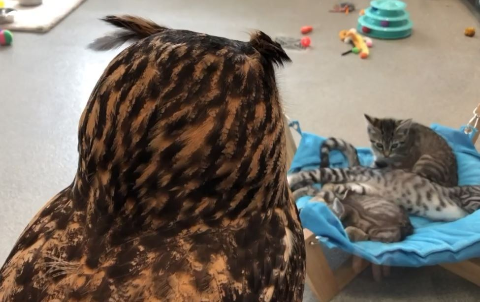 owls and kittens.JPG
