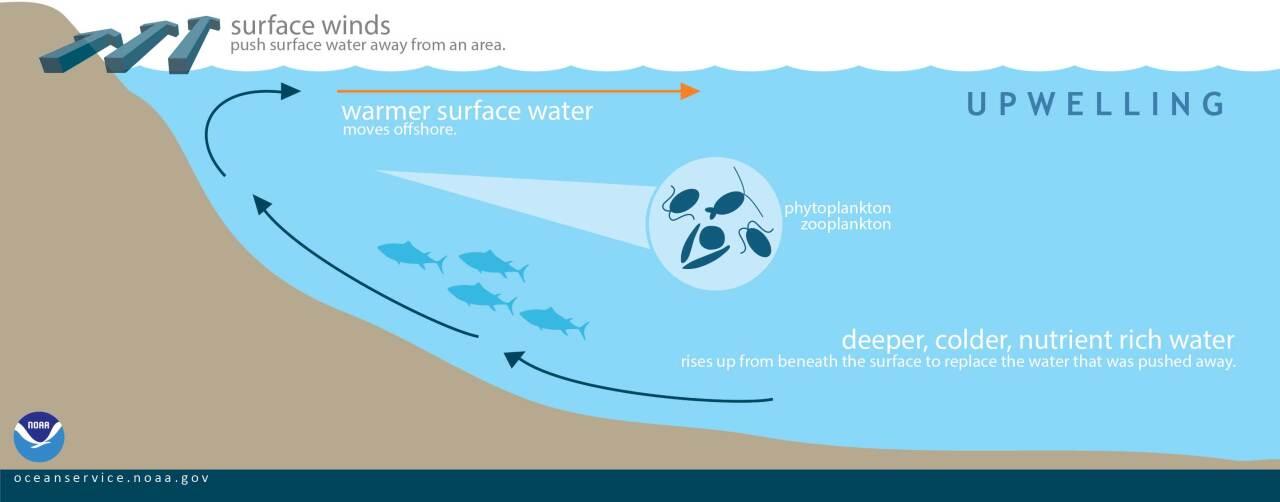 Upwelling explained