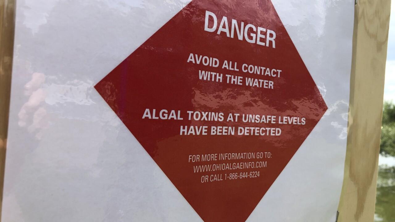 Algal bloom in Springfield Lake