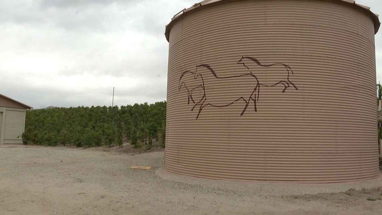 3 HORSE .jpg