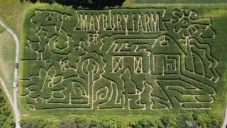 Maybury Farm Corn Maze.jpg
