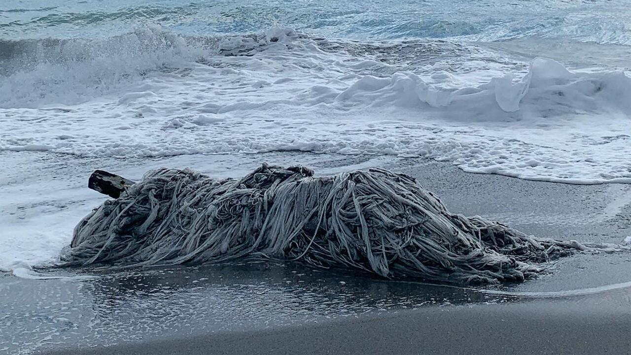 Plastic mass on the beach loggerhead marinelife center