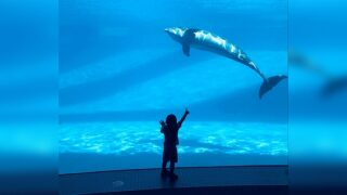 Sensory Sensitive Sunday returning to Texas State Aquarium