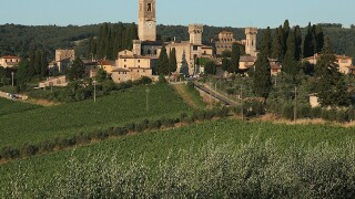Harvest devestation in Italy means less olive oil, rising prices