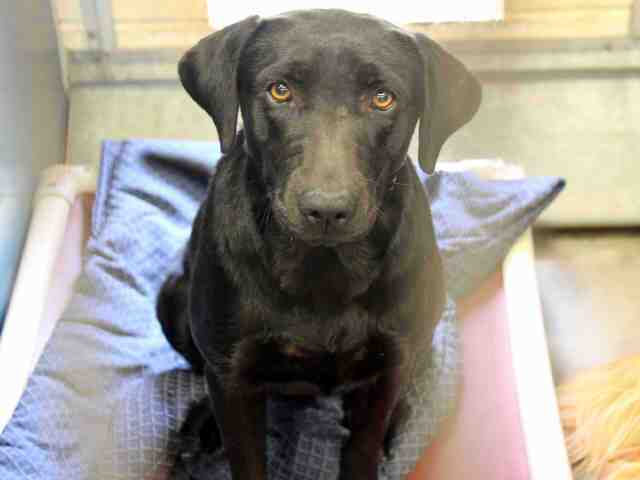 Adoptable pets from Maricopa County Animal Care and Control and Arizona Humane Society (5/13)