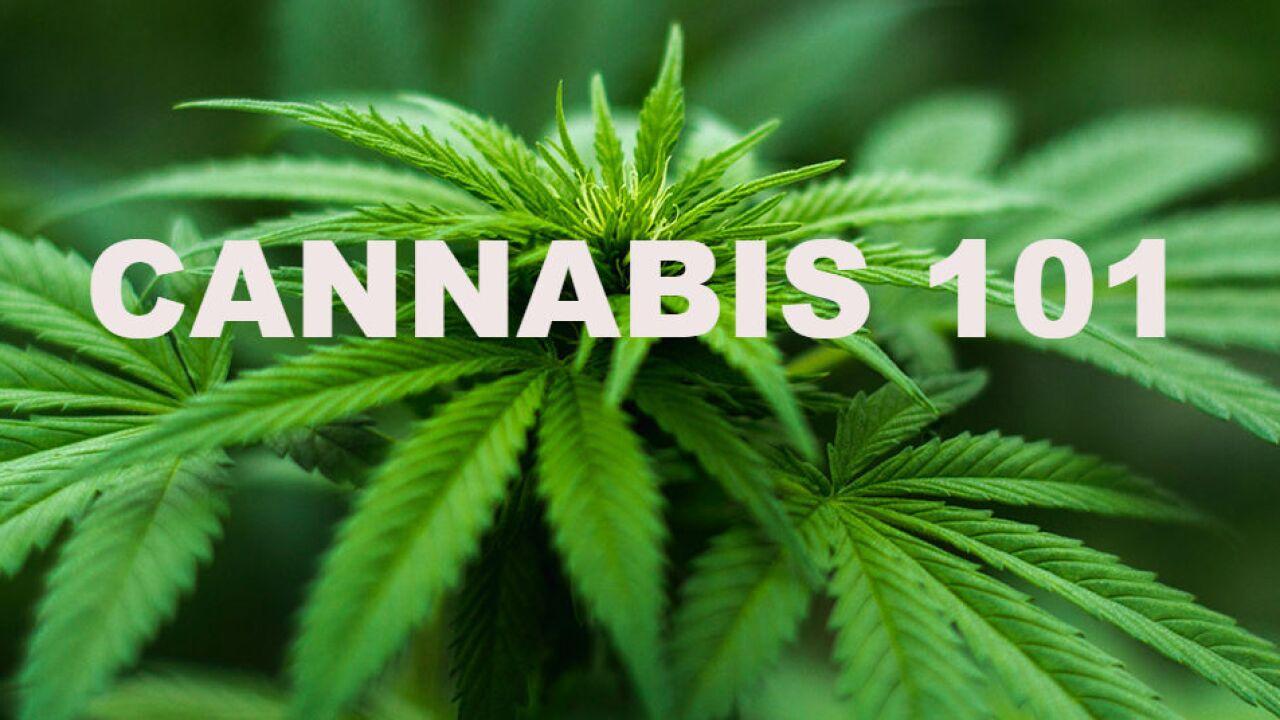 cannabis101.jpg