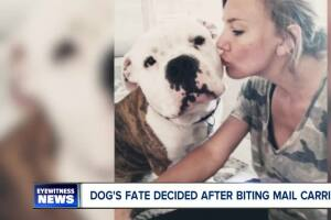 Final decision made on Chunk the pit bull
