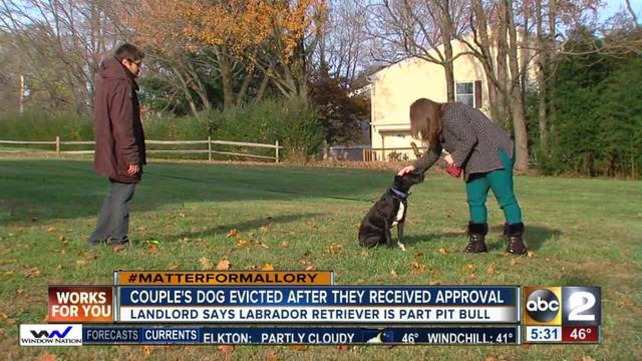 Couple's dog evicted due to banned breeds list