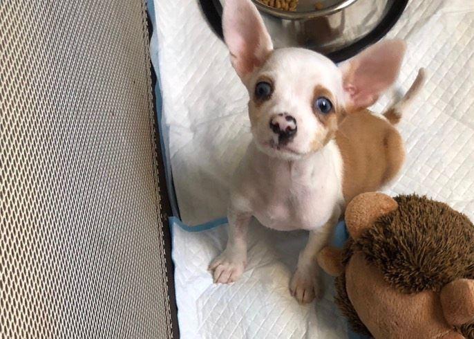 Pet Adoption on Flipboard | SPCA, Windsor, ON, Pets
