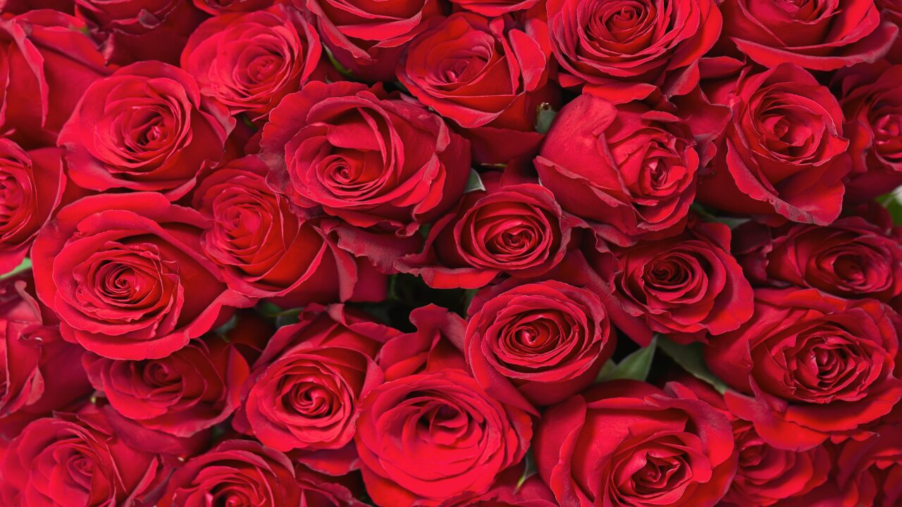 Get 50 roses delivered to your Valentine for $50