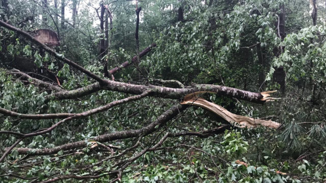 Second Possible Tornado in NNK Katie Dixon .png