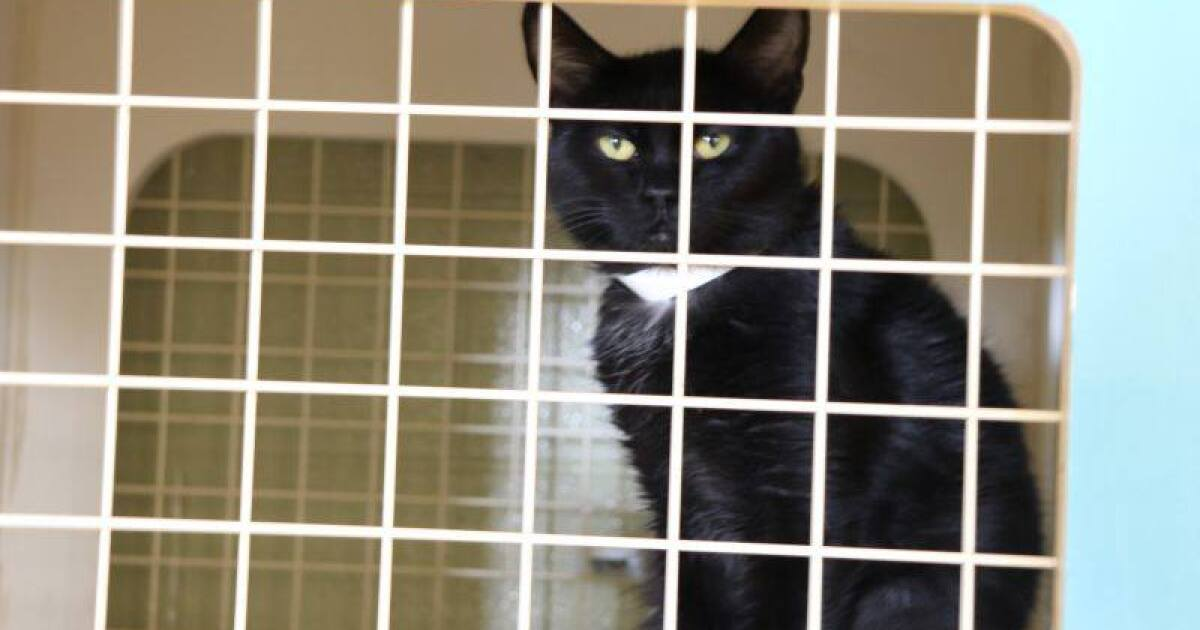 Indy animal shelter can't take anymore cats, adoptions free