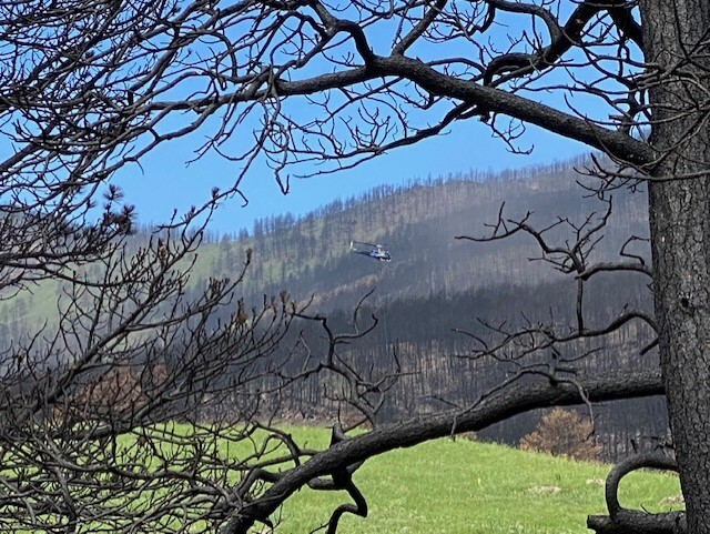 Chopper lifting burned tree from trail area at Heil Valley Ranch