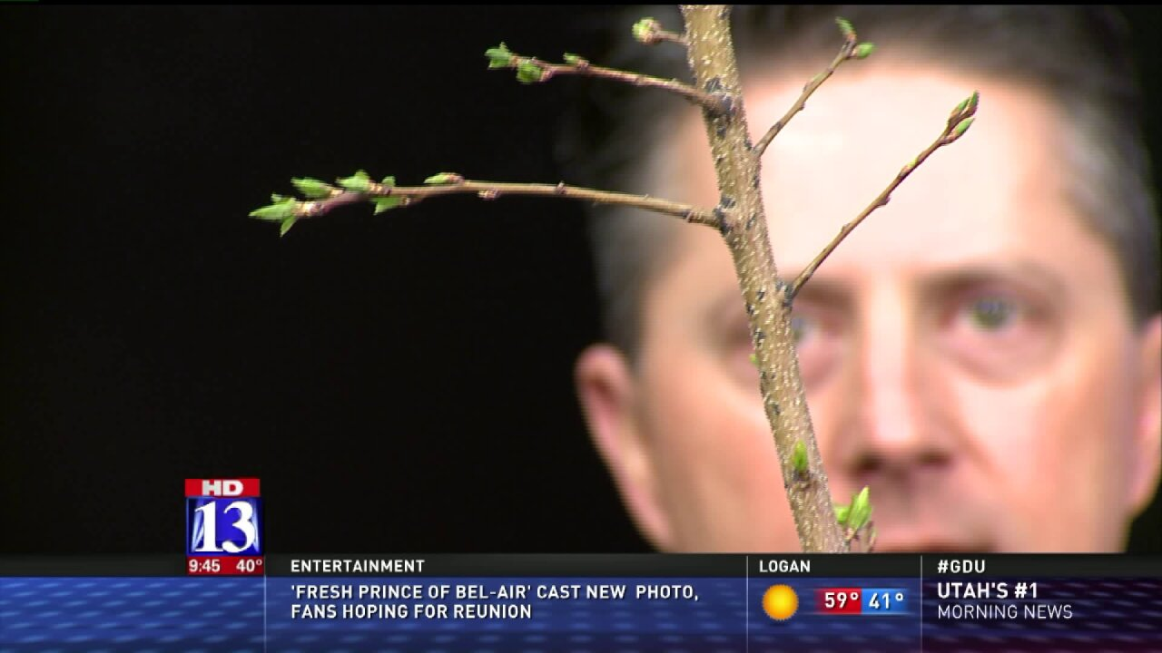 Springtime pruning tips from a USUhorticulturist
