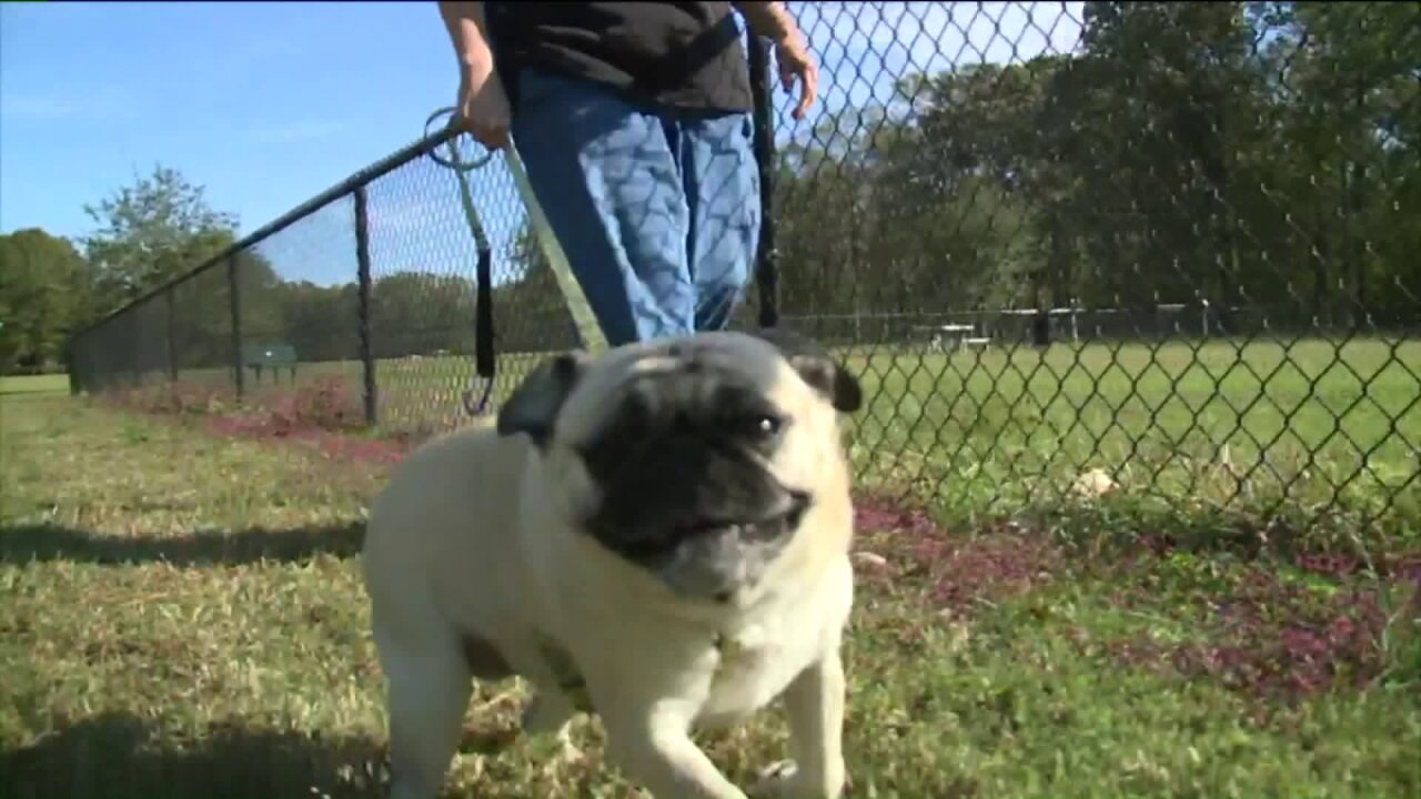Virginia Beach Animal Control reminding residents to keep dogs on leashes, stepping up enforcement oflaw